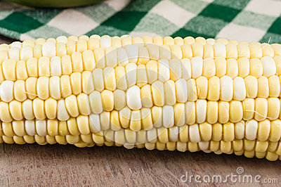Corn or maize ear showing kernels