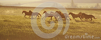 A herd of horses. The rising sun.