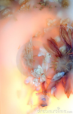 Preserved Flowers Eleven