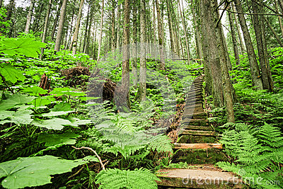 Stairway through forest