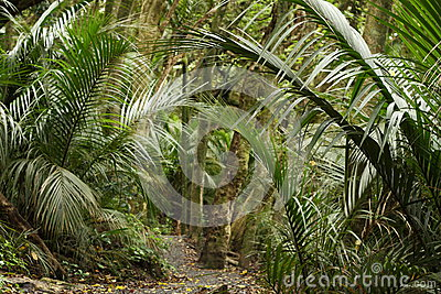 Palm trees in rain forest