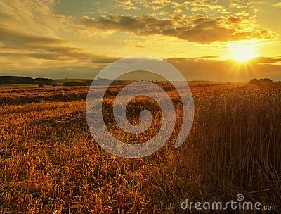 The sunset cloudy orange sky background. Setting sun rays on horizon in rural meadow.