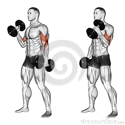 Exercising. Curl with a dumbbell grip hammer