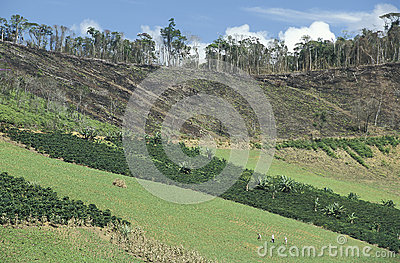 Cultivation and deforestation in Brazil.