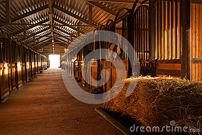 In the stable with horses.