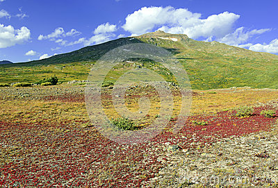 Autumn foliage - Alpine tundra in fall colors, Rocky Mountains, USA