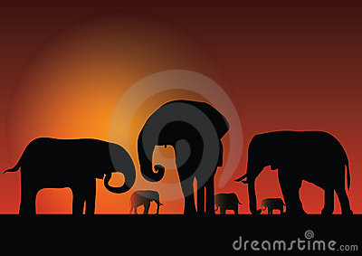 Silhouette of elephans