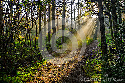Roan Mountain, Crepuscular rays, Tennessee forest
