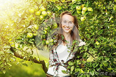 Woman in a sunny apple tree garden during the harvest season. Yo