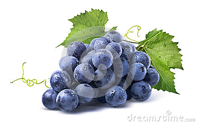 Blue wet grapes bunch  on white background