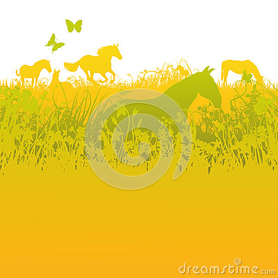 Herd of horses on green pasture