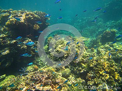 Coral and fish on the Great Barrier Reef, Australia