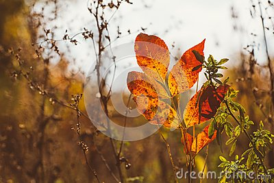 Abstract foliage background, beautiful tree branch in autumnal forest, bright warm sun light, orange dry maple leaves, autumn seas