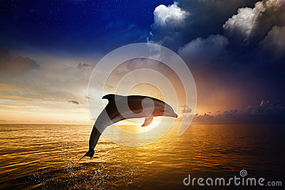 Dolphin jumping