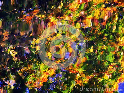 Colorful leaves reflection abstract