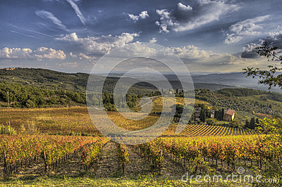 Vineyard of Chianti