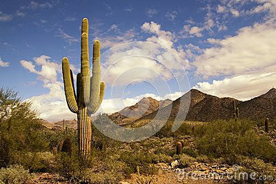 Desert cactus and mountains landscape