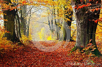 Autumn, fall forest. Path of red leaves towards light.