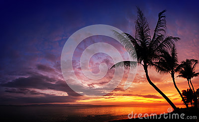 Sunset over the sea with tropical palm trees