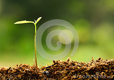 Plant growing over green environment