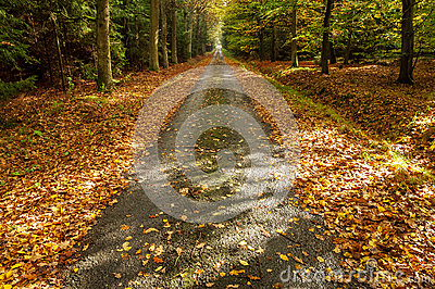 A Path in Autumn Forest