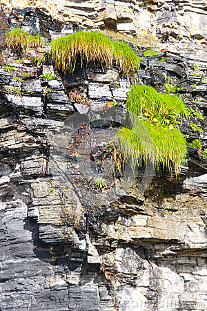 Plants on a cliff face