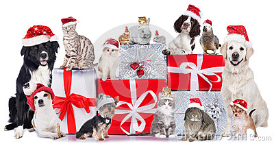 Group of pets in a row with santa hats