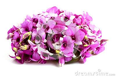 Pinks orchid