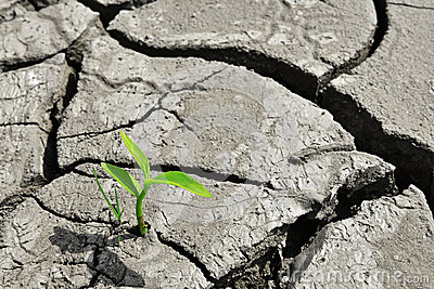 Grow up,growth,Dry cracked land Green shoot,new life,new hope,heal the world