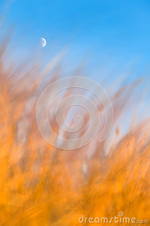 Crescent Moon Above Burning Grass