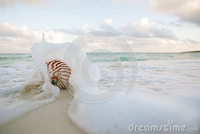 Nautilus shell on white beach sand rushed by sea waves