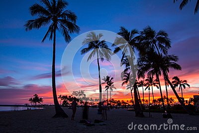 coconut trees in the sunset in Hawaii