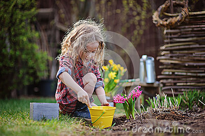 Beautiful child girl in spring garden plays and planting hyacinth flowers