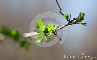 Yoing twig of tree in forest