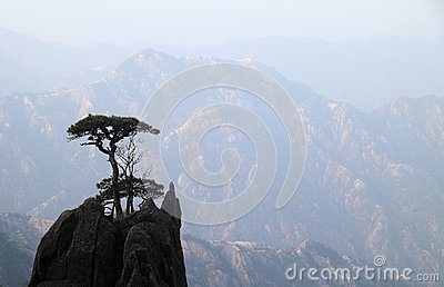 Trees on mountain top