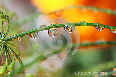 Water drop reflection flowers nature