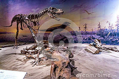Fossil Exhibit in Royal Tyrrell Museum