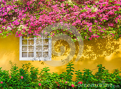 White Window, Flowers, Yellow Exterior Wall Home