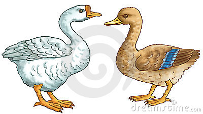 Duck and the goose