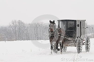 Amish horse and buggy,snow,storm