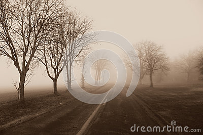 Country Road Fog, Trees