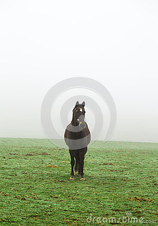 Horse in the mist on a meadow
