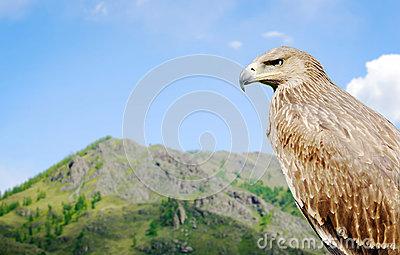 Eagle against the background of a high mountain looking ahead