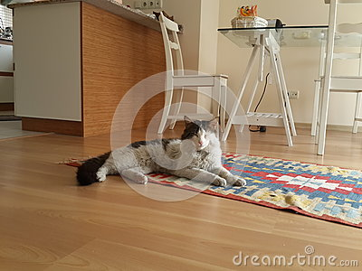 Cat on Rug