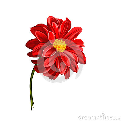 Dahlia flower vector illustration  hand drawn