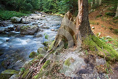 Forest landscape with river