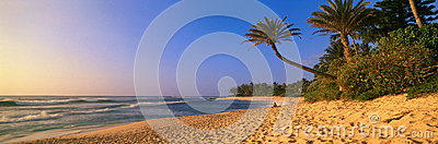Panoramic view of palm trees and North Shore beach, Oahu, Hawaii