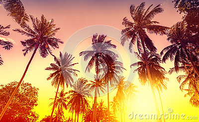 Golden sunset, nature background with palms