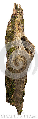 Fragment of bark with a hollow