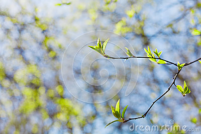 Young spring twig with green leaves against blue sky, lovely landscape of nature, new life